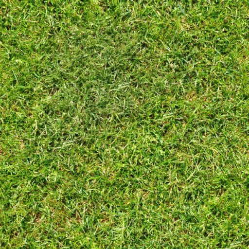 short green grass seamless texture